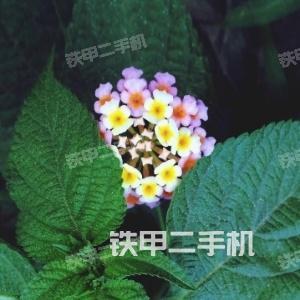香港九龙城神钢SK17SRACERA挖掘机